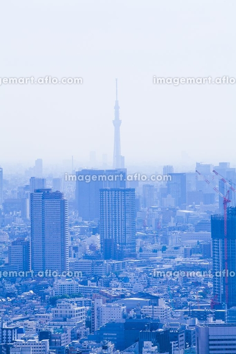 都庁展望台から見た東京スカイツリーの販売画像