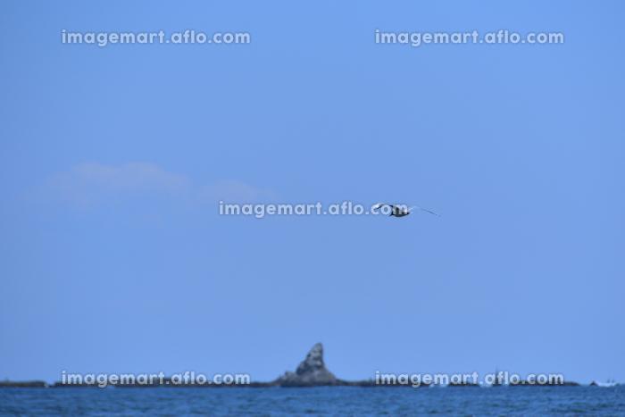 カモメと烏帽子岩の販売画像