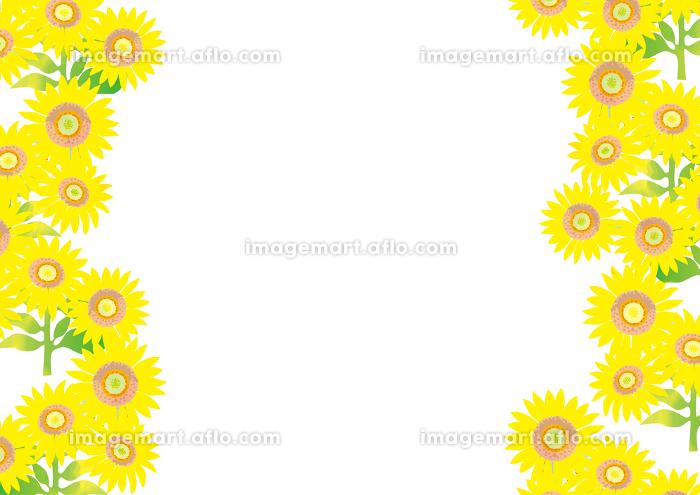 元気な夏の向日葵の背景イラスト イメージマート