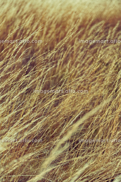 the abstract texture of a yellow grass like autumn concept