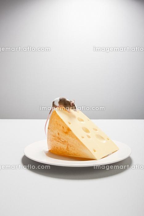チーズとネズミの販売画像