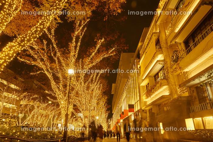 東京都 表参道 クリスマスイルミネーション