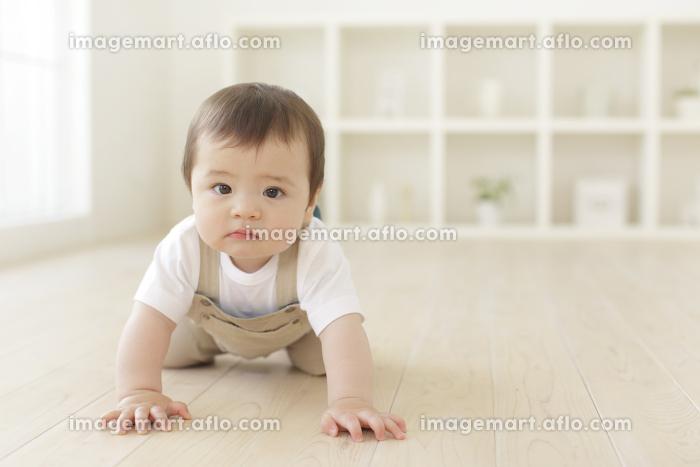 リビングでハイハイするハーフの赤ちゃんの販売画像
