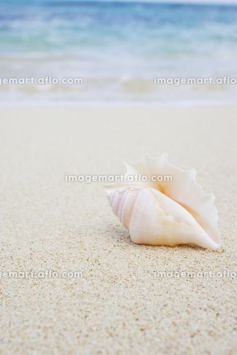 波打ち際に置かれた貝殻の販売画像