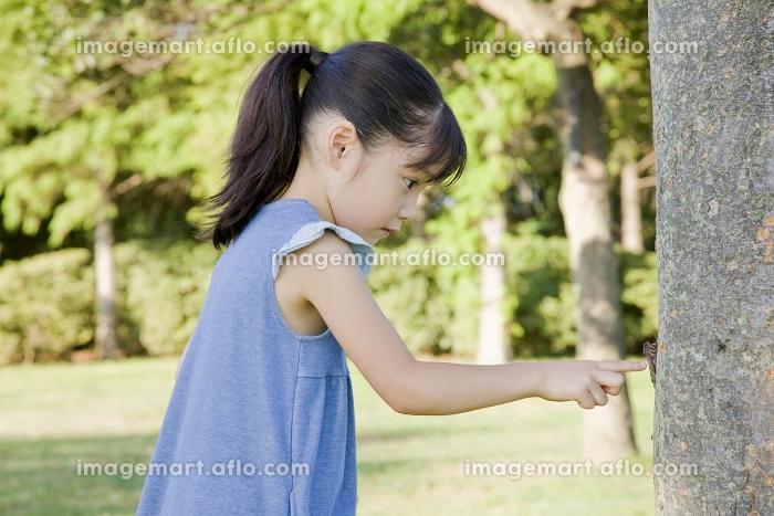木にとまるセミを見つけた女の子