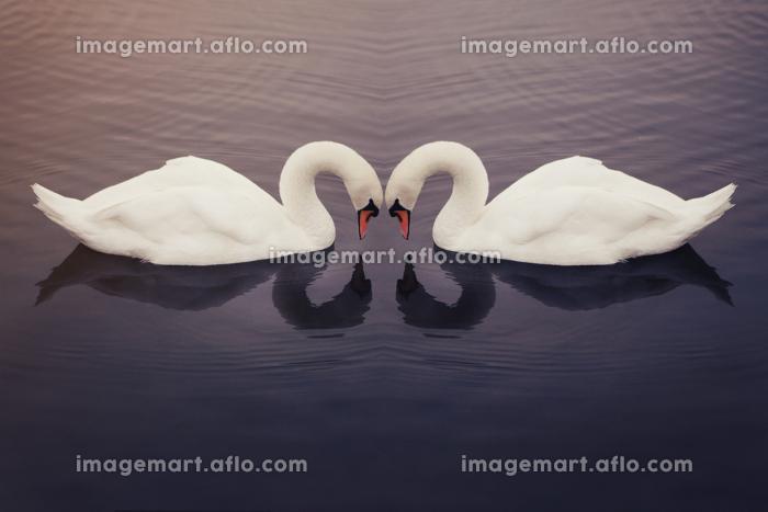 羽衣 鏡 優美の販売画像