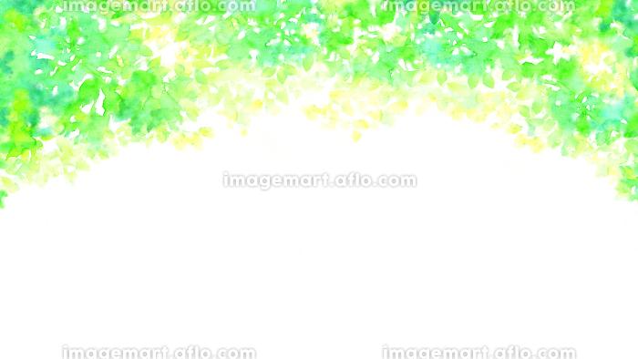 水彩で描いた新緑のフレームの販売画像