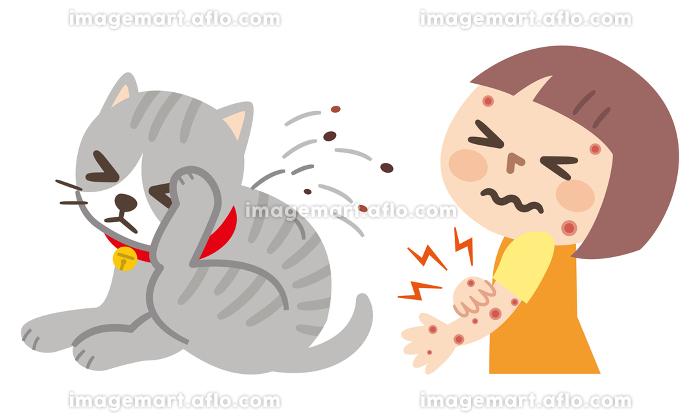 ノミで痒くて体をかきむしる猫と虫に刺された女の子の販売画像