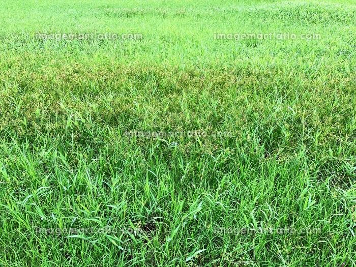 雑草の生い茂る空地 2の販売画像