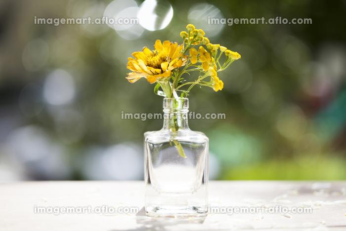Orange aster flowers in a vaseの販売画像
