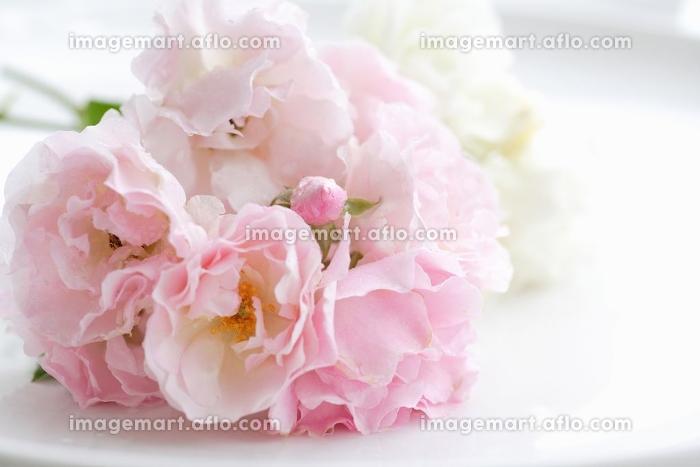 薔薇の花の販売画像