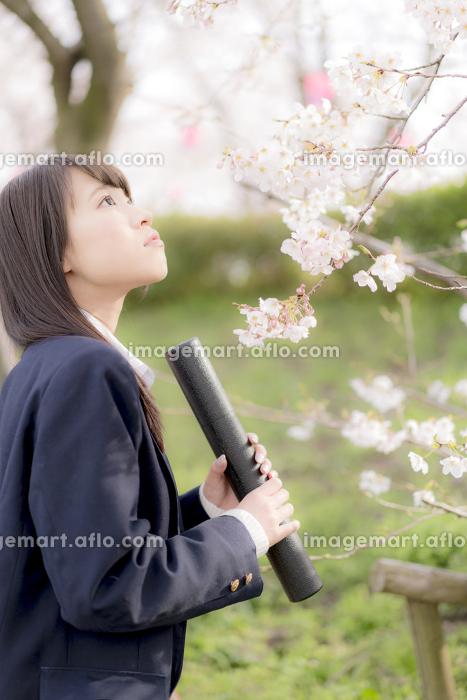 桜の木の下で卒業証書を持つ女子高生の販売画像