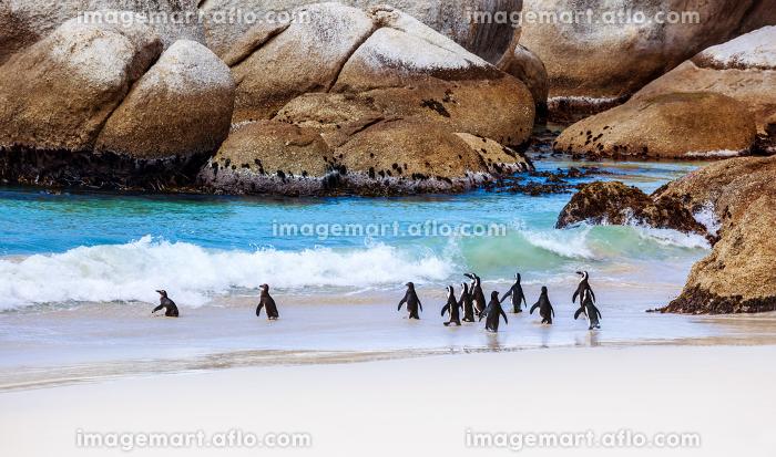 南部アフリカ 浜 かわいいの販売画像
