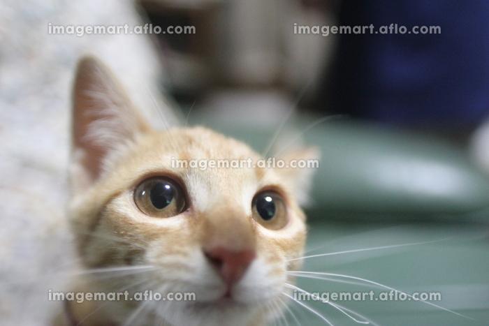 cat,猫,ネコ,ねこ,Katze,chat,gatto,gato,feles,кошка,KAT,の販売画像