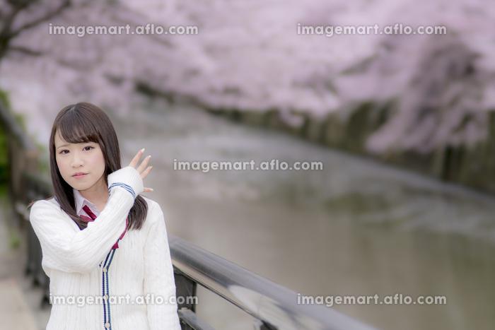 桜の木の下の女子高生