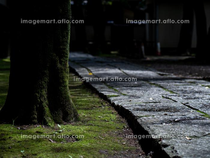 石畳の参道と苔むした林 7月の販売画像