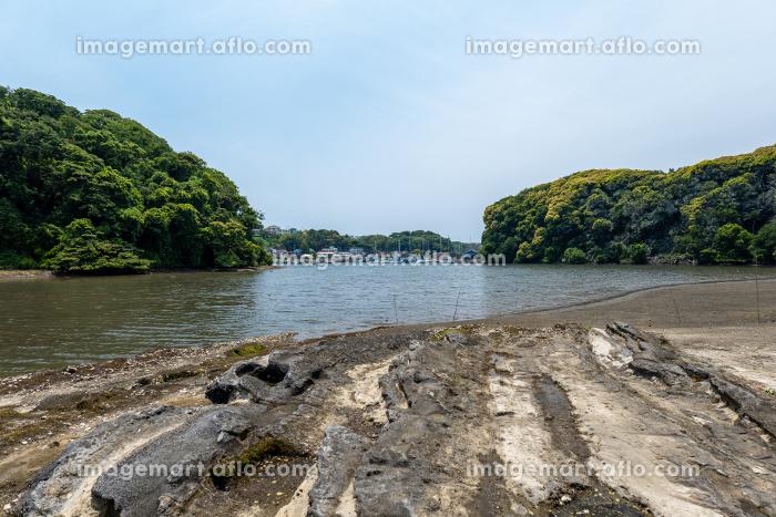 小網代の森の岸辺と干潟 6月 神奈川県三浦半島の販売画像