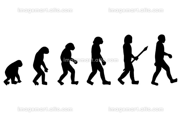 人類の進化イメージの販売画像
