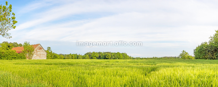 Rural green landscape panorama with wheat field and old barn, blue skyの販売画像