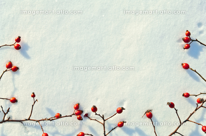Winter snow background decorated with rose hip berries