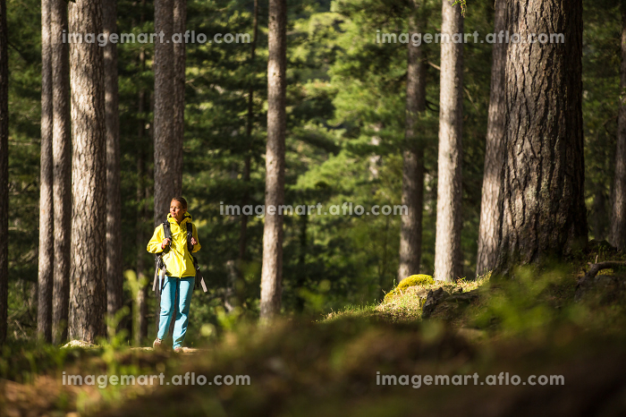 Pretty, young female hiker walking through a splendid old pine forest (shallow DOF)の販売画像