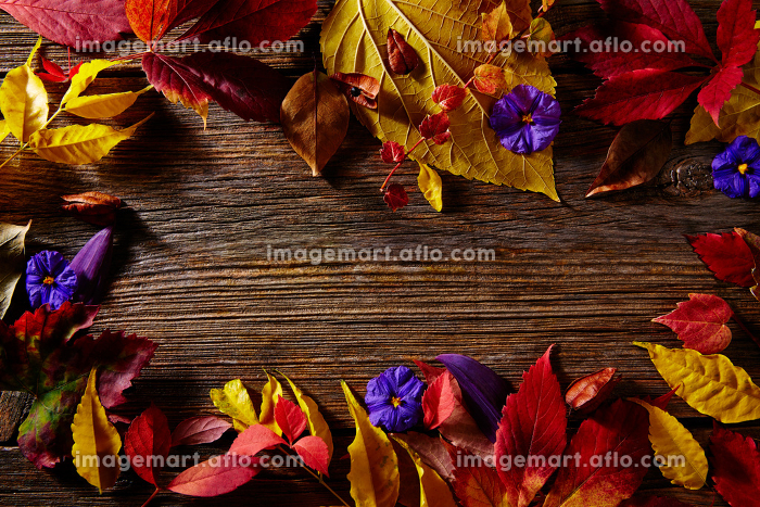 Halloween copy space background on wooden backdropの販売画像
