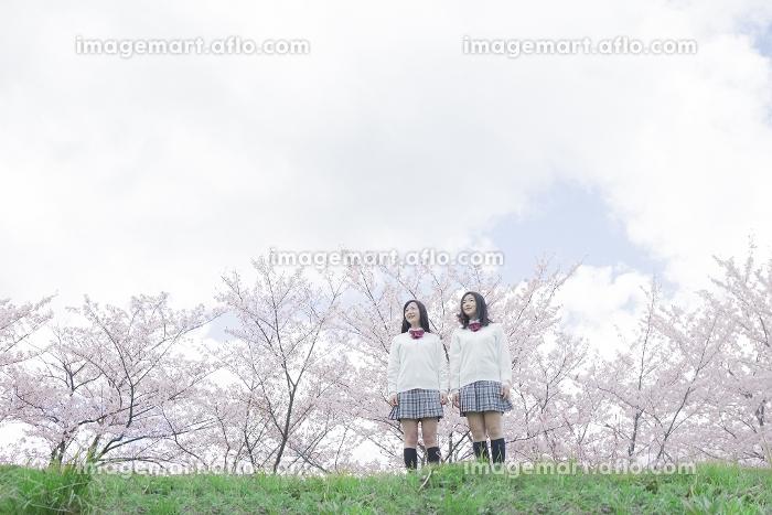 桜をバックに立つ高校生の販売画像