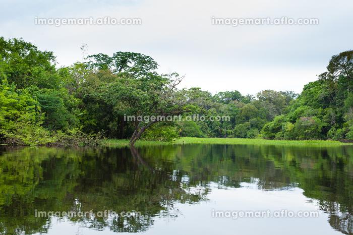 Panorama from Amazon rainforest, Brazilian wetland region.の販売画像