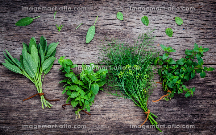 Various aromatic herbs and spices from garden fennel ,rosemary,oregano, sage and peppermint set up on old wooden background ..の販売画像