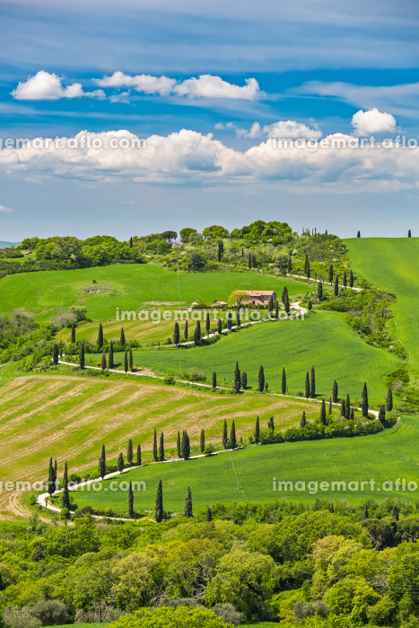 Beautiful landscape in Tuscany with curved roadの販売画像