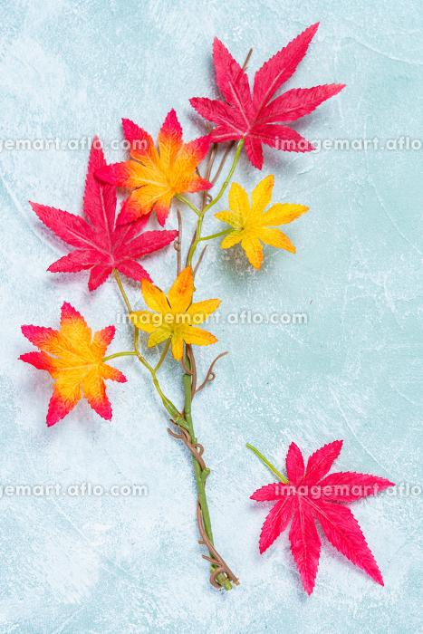 背景素材 紅葉の販売画像