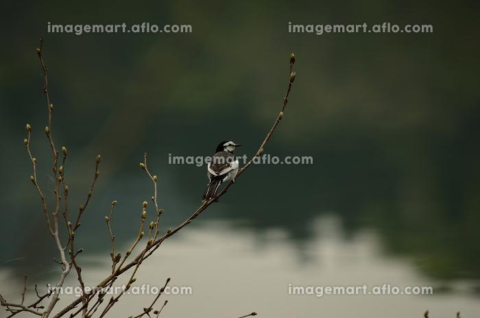 枝でくつろぐ鳥の販売画像