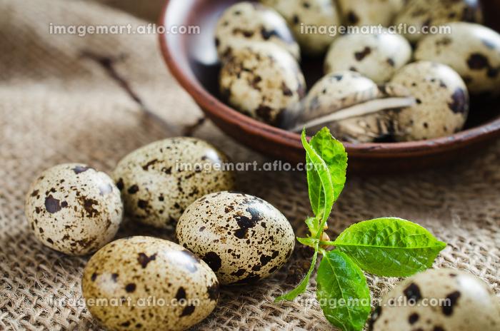 Fresh Organic Quail Eggs and Spring Foliage.