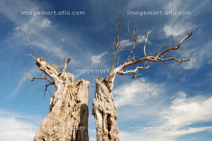 dried treeの販売画像