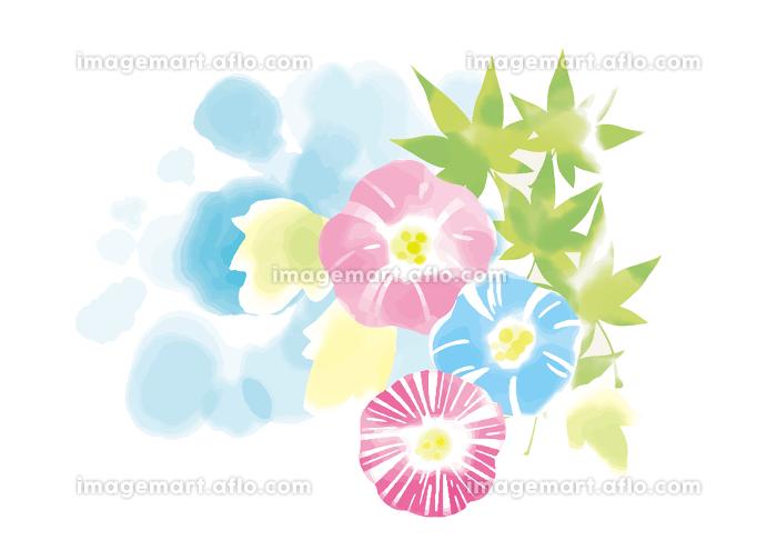 水彩画の様な爽やかな朝顔と青空の販売画像