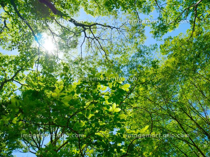 6月の緑の販売画像