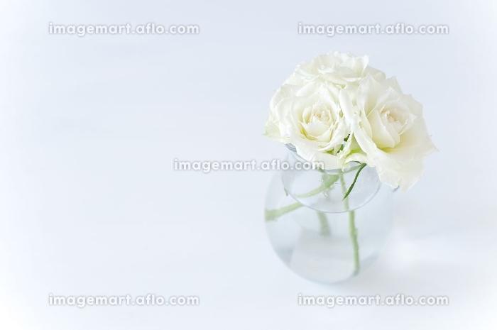 白いバラの花瓶生けの販売画像