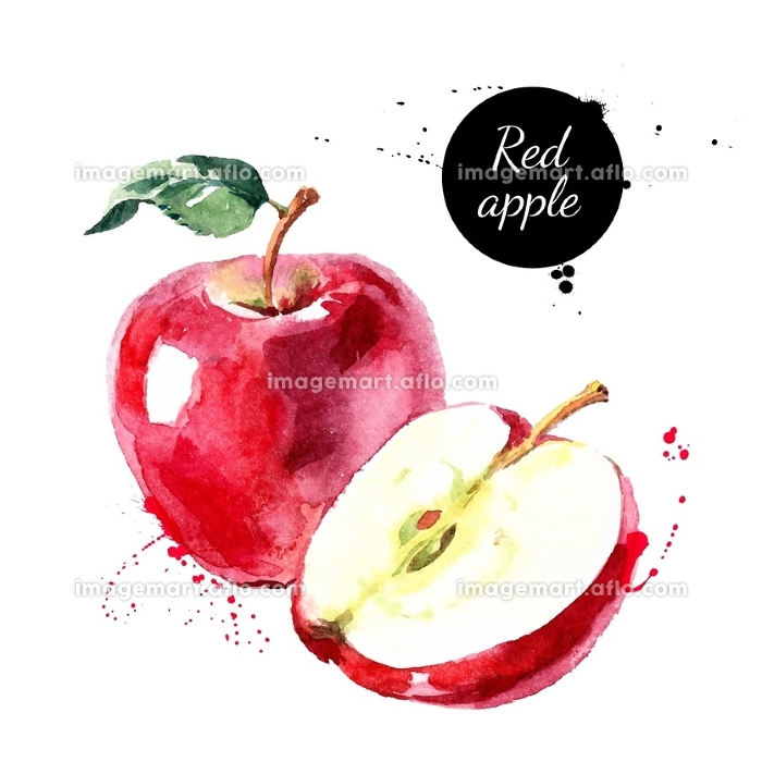 Watercolor hand drawn red apple. Isolated eco natural food fruit vector illustration on white background