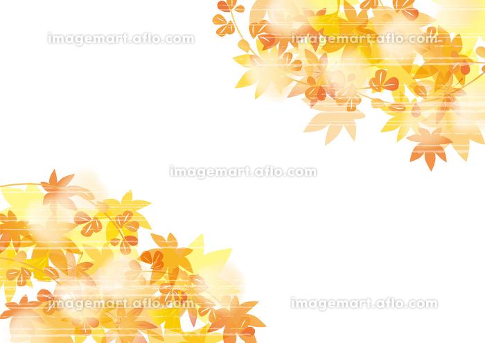 紅葉 和風柄 淡い 秋の販売画像