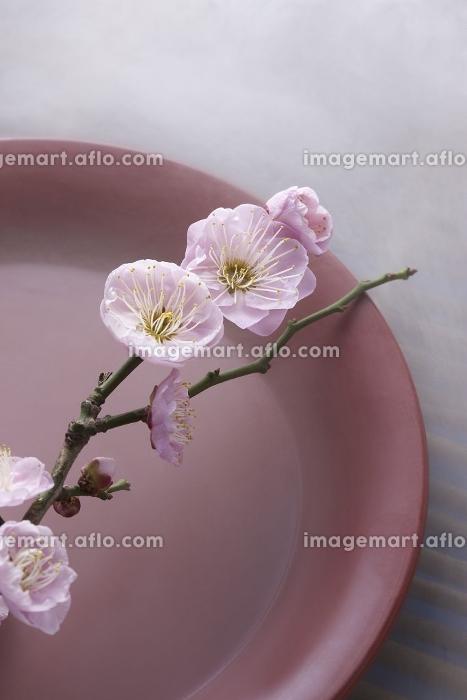 梅の花と盃の販売画像