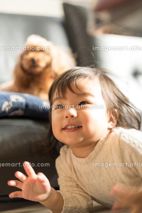 子供とペット(犬)の販売画像