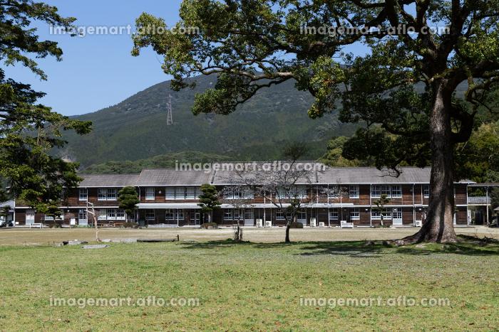 秋月城跡の桜と大楠の風景と秋月中学校 福岡県朝倉市の販売画像