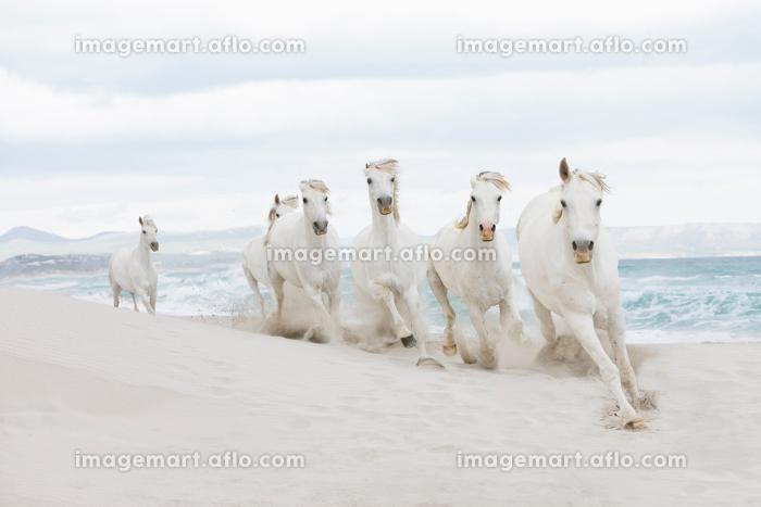 Horses on the beachの販売画像