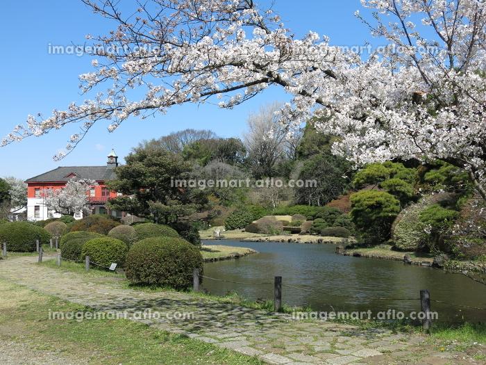 小石川 植物園