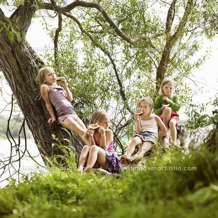 Girls eating watermelon in tree by lakeの販売画像