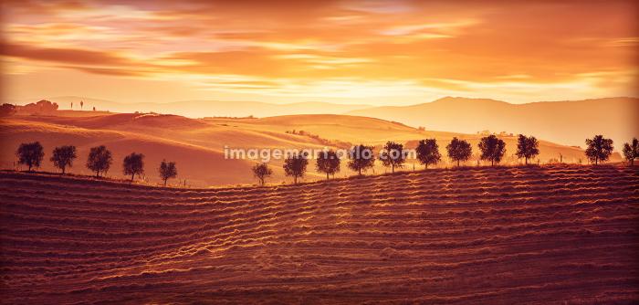 トスカーナ 農業 農耕の販売画像