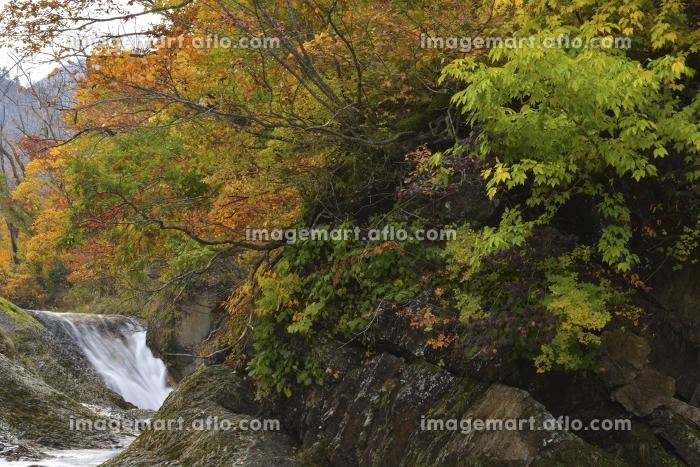 紅葉のかじか滝の販売画像