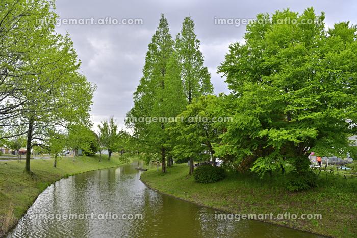 新緑の風景の販売画像