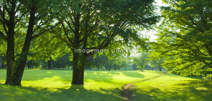 庭園の販売画像