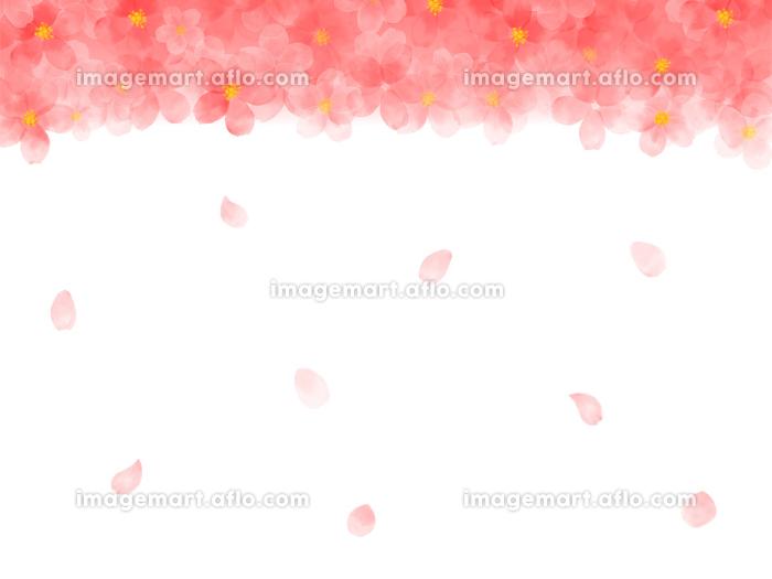 水彩画の桜イラスト フレームの販売画像
